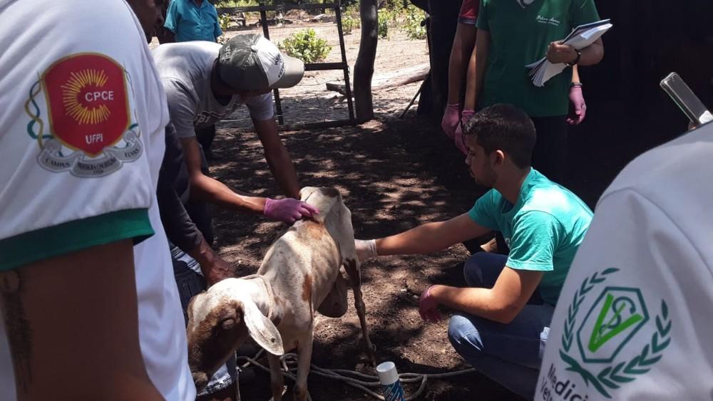 UFPI faz trabalho de campo em comunidade de Gilbués