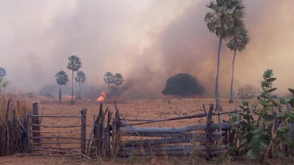 Incêndio que dura mais de 24 horas mata animais e destrói lavouras no interior do PI