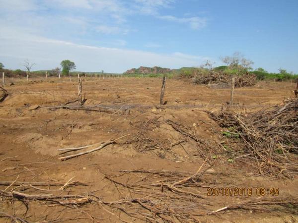 Agricultura de Parnaguá prepara o solo para o Plantio de Cajú e Mandioca
