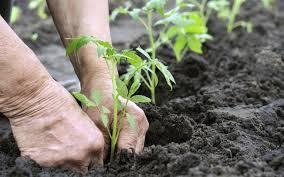Bom Jesus: Prefeitura irá distribuir mais 3 mil mudas de plantas