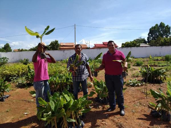 Agricultura de Gilbués está incentivando o cultivo da banana