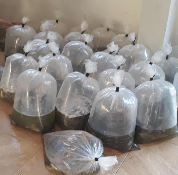 Prefeitura de Gilbués realiza entrega de 20 mil alevinos