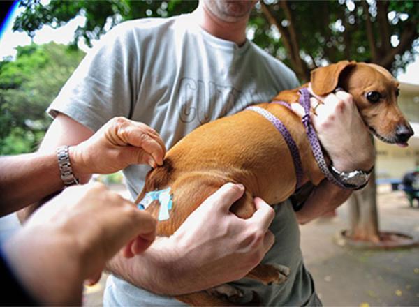 Piauí tem 76 municípios com pendências na vacinação antirrábica