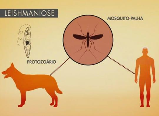 Gilbués registra casos de cães infectados com CALAZAR