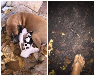 Filhotes de cães são queimados vivos no Piauí